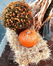 a instagram pumpkin downtown