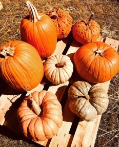 a instagram pumpkin